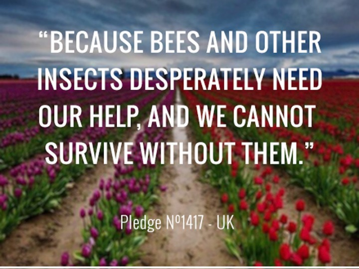 Because Bees and other insects desperately need our help