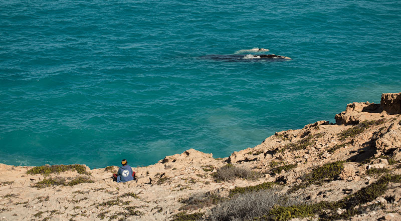 Stop Oil Companies From Destroying The Great Australian Bight 3